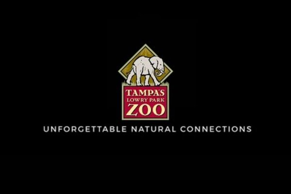 Tampa's Lowry Park Zoo: Unforgettable Natural Connections