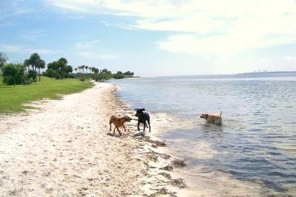 Picnic Island Dog Beach
