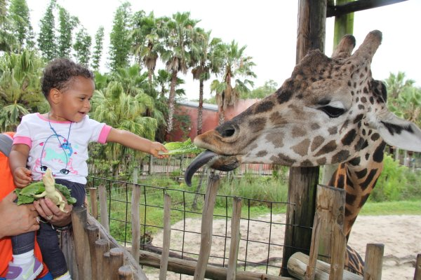 Tampa's Lowry Park Zoo