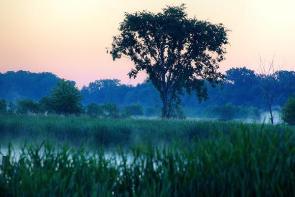 Dawn at Eagle Marsh