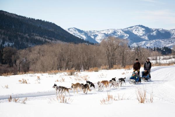 Dogs Pulling a Sled