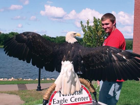 Angel the Eagle   credit National Eagle Center