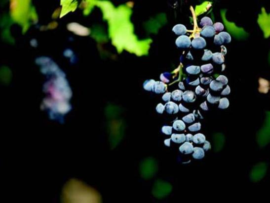 Salem Glen Winery | credit olivejuicestudios.com
