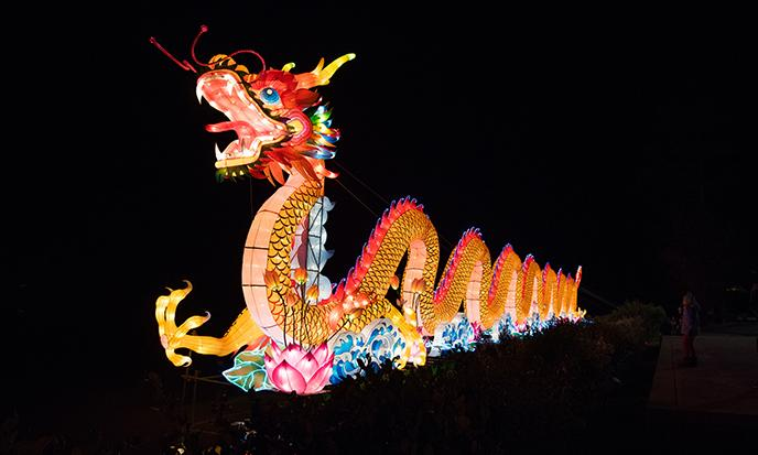 North Carolina Chinese Lantern Festival Dragon