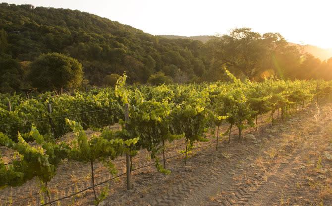 Salinas Valley Vineyard