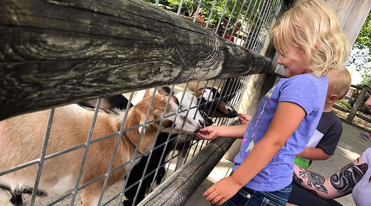girl feeding goats at deanna rose