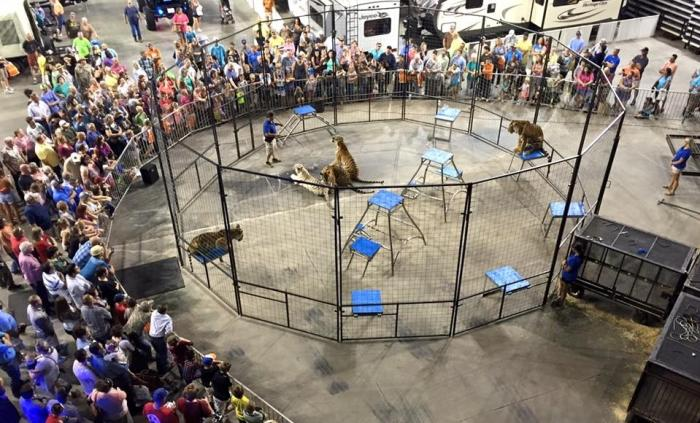 Tiger Expo