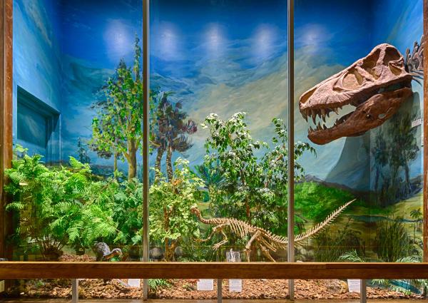 Sierra College Natural History Museum