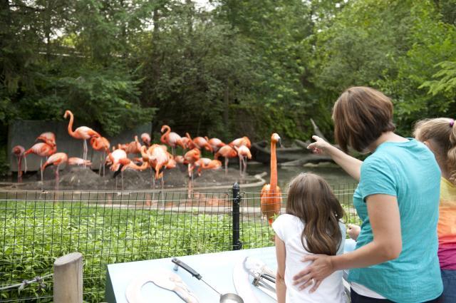 Flamingos at the Columbus Zoo