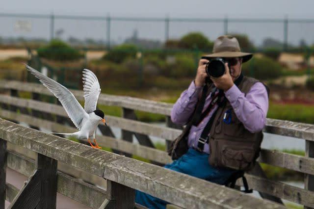 Bolsa Chica Photographer