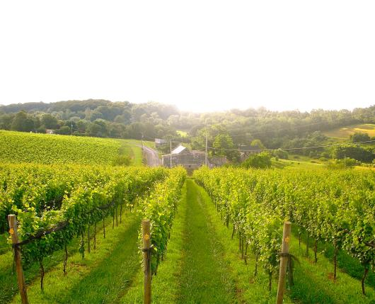 BlairVineyards01_DiscoverLehighValley
