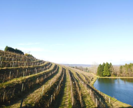 BlueMountainVineyards03_DiscoverLehighValley