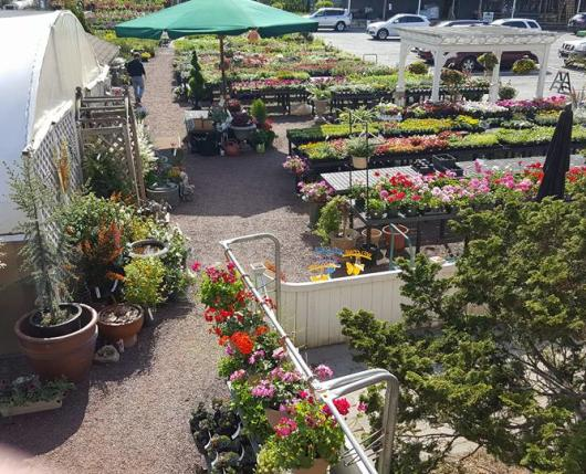 Neighbors Home & Garden Center Plant and Flower Selection