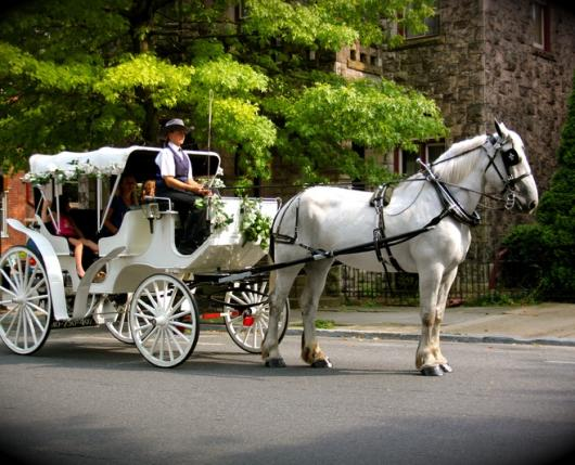 carriage-3.jpg
