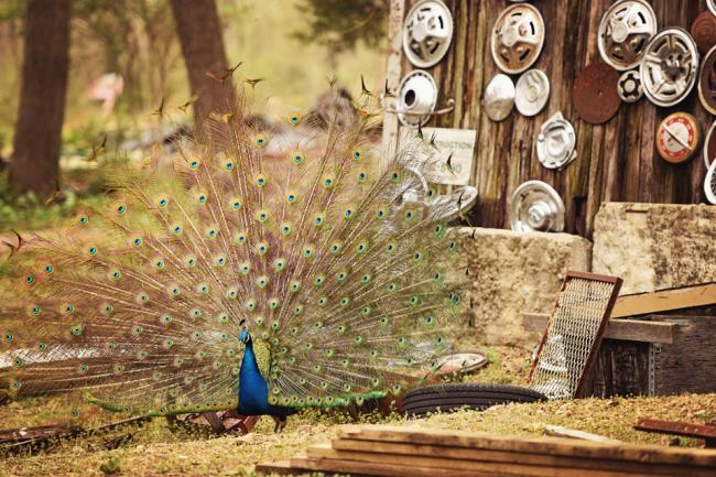 truckhenge peacock