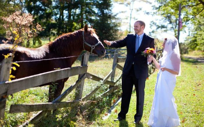 Wedding with Horses