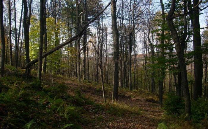 On-Site Kicky's Ridge Trail