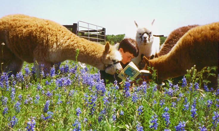 Alpacas at Peach Creek Windery