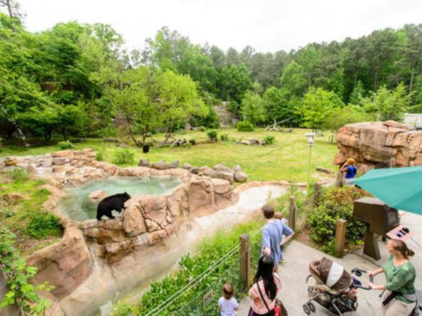 Explore the Wild - Bears