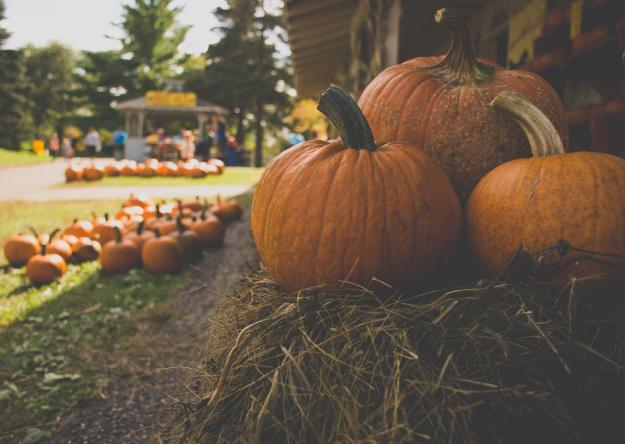 Pumpkin Patch   Kid Halloween Events