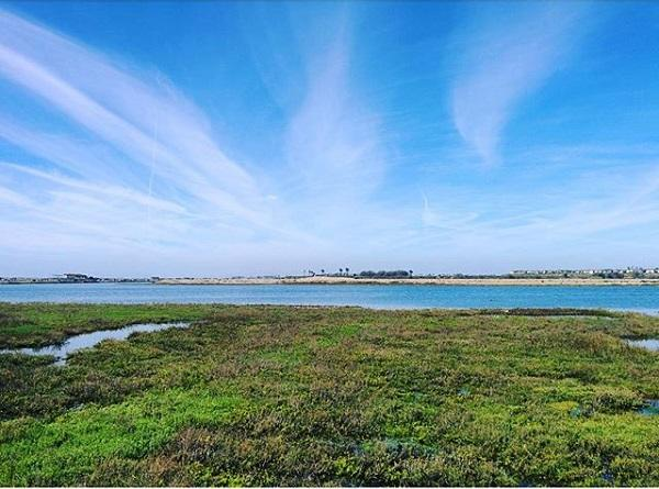 Bolsa Chica Wetlands Photo by @briizsasum