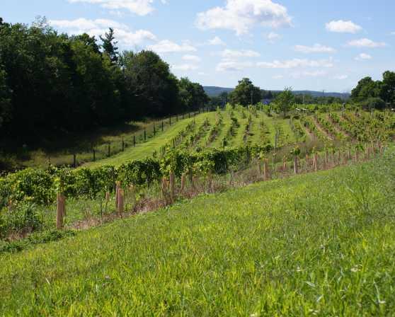 Hudson Chatham Vines