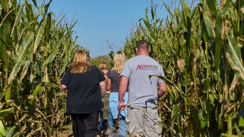 Corn Maze at Beasley's Orchard in Danville, IN