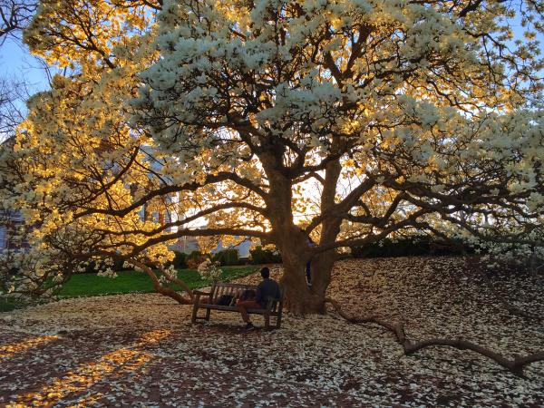 Spring - UVA