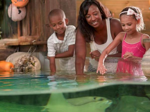 Family at Zoo with Stingrays