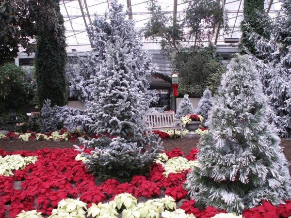 Botanical Conservatory at Christmas