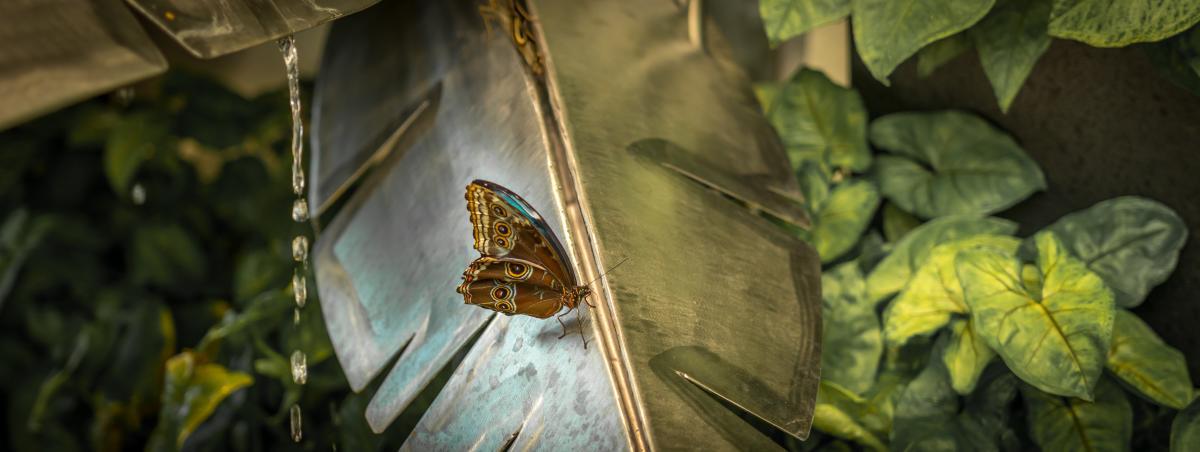 hershey-gardens-conservatory-butterfly-atrium-rainy-day