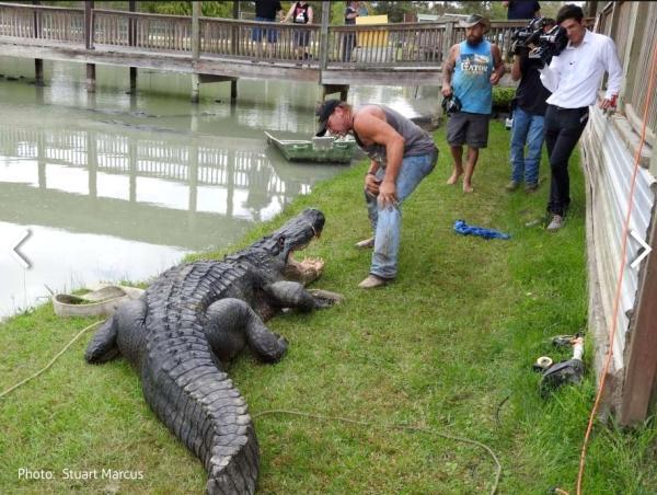 Gator Country's Big Texas