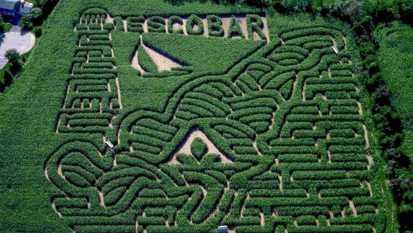 Escobar Corn Maze.jpg