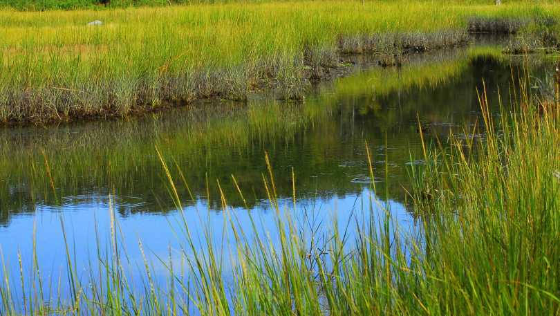 Touissett Marsh Wildlife Refuge