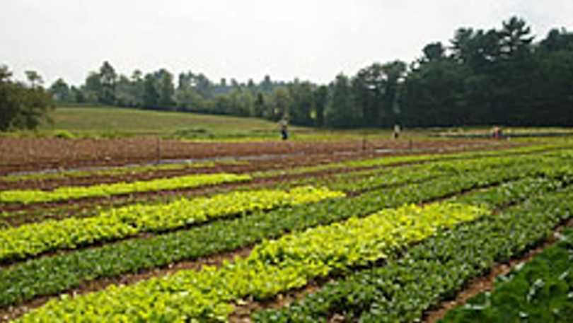 Dutra Farm
