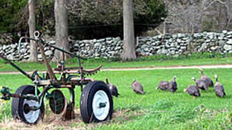 Hodgkiss Farm