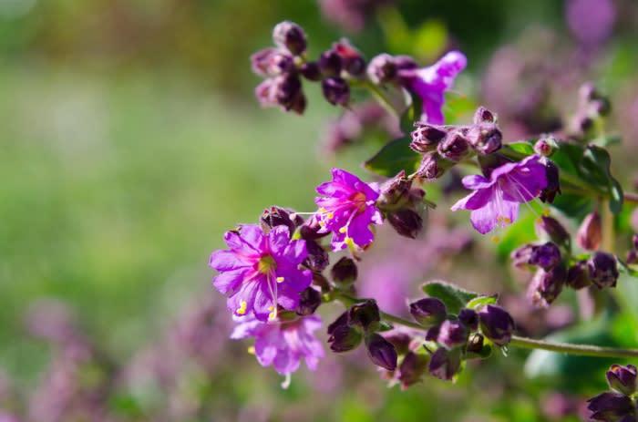oc parks wildflowers