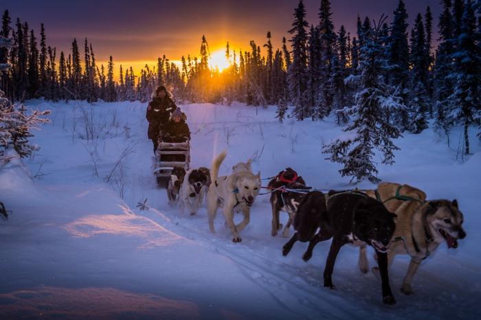 Mushing with Nautique Sky north of Fairbanks - Frank Stelges - Fairbanks Alaska