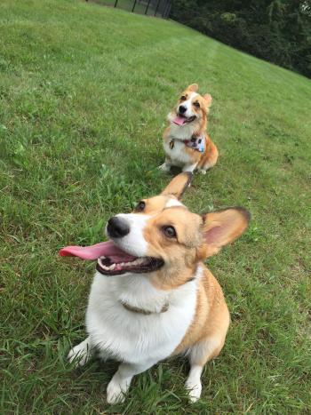 Rockford Dog park