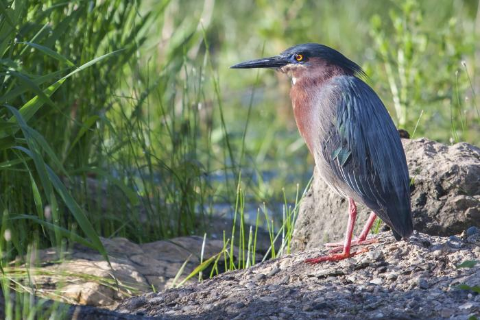 Bird in Alvin, Texas