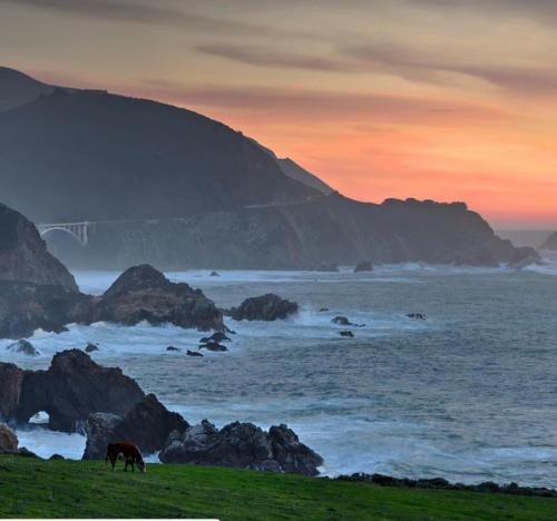 Grazing Cattle in Big Sur