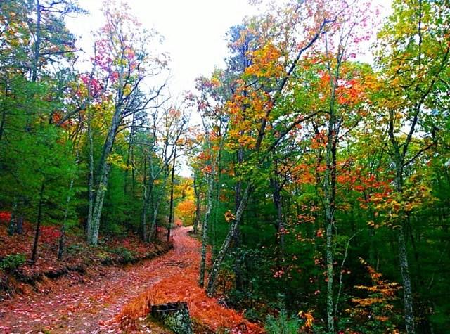 Fall Country Road - Fall Photo