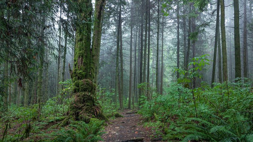 Stanley Park's Interior Forest
