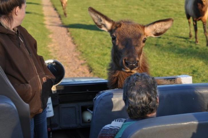 Elk Up Close & Personal at Lake Tobias Safari Tour 2014