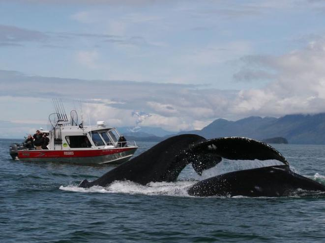Whale Tail Boat