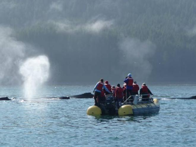 Skiff Tours and Wildlife on an Alaska Adventure Cruise