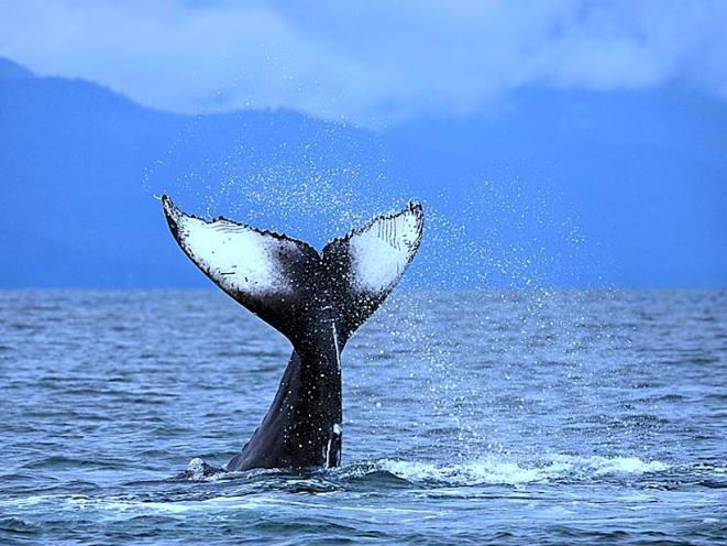 whale photo 2