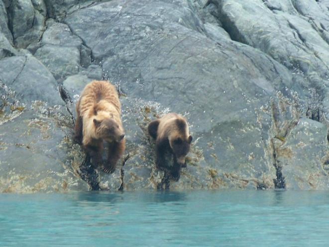 Spirit Walker Expeditions of Alaska - Bear Viewing
