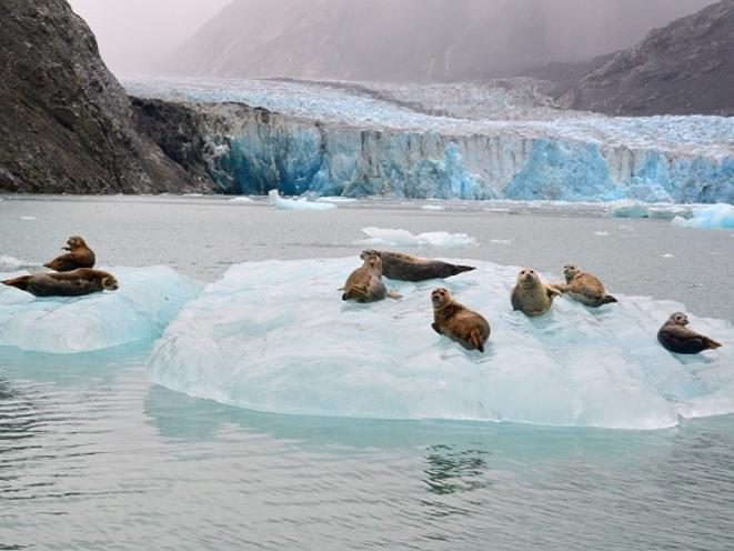 Wildlife Glacier Bay