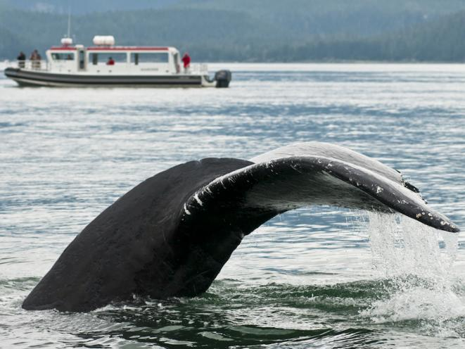 Whale Fluke and Boat